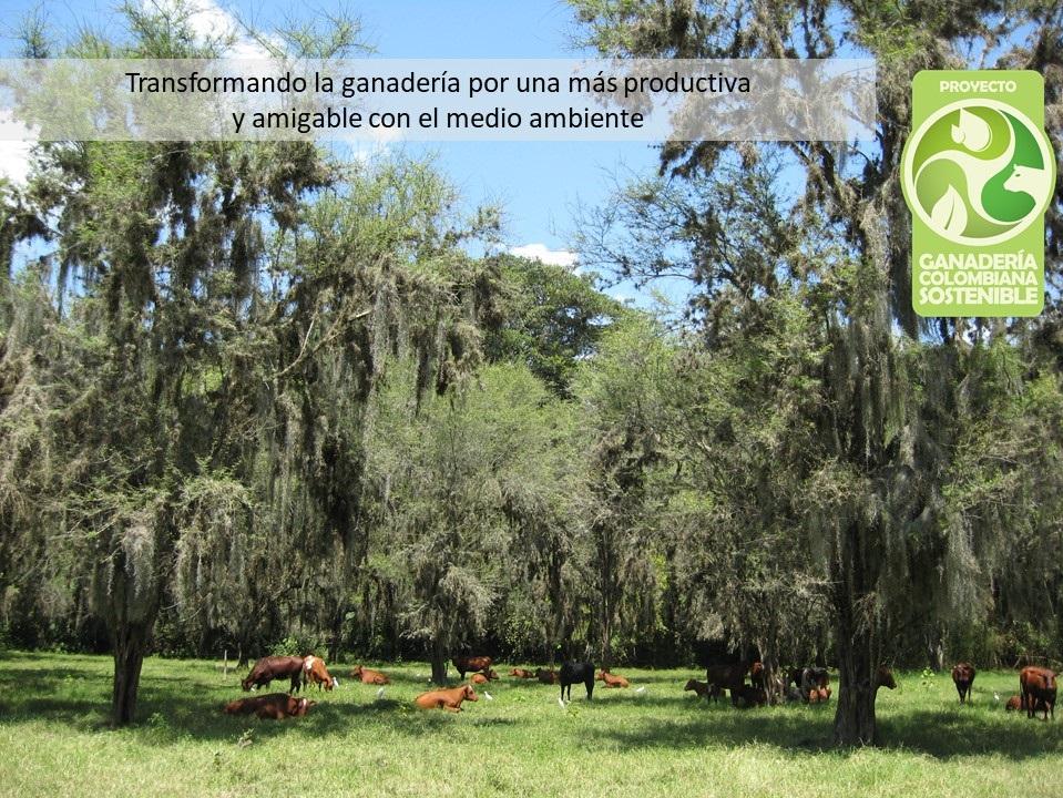 Encuesta Fincas con Sistemas Silvopastoriles en Colombia