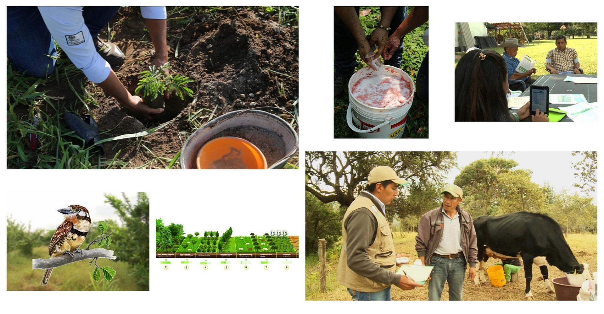 Encuentra aquí videos de ganadería sostenible